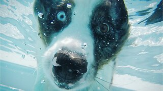 Pool Safety Tips For Your Furry Dog Friends
