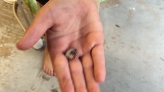 Family Reacts To Boy That Likes Eating Bugs - Video