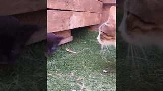 Clever Stray Cat Reveals Her Kittens - Video