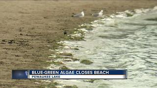 Possible blue-green algae could shut down Pewaukee beach - Video
