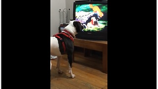 Dog has new favorite animated movie to watch - Video