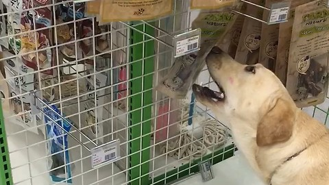 This Pup Likes Shopping Because He Gets To Pick Out His Favorite Treat