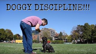Dad Gives Puppy Obedience Lessons in Park - Video