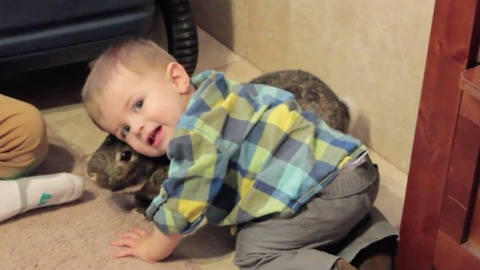 Toddler just can't get enough of pet bunny