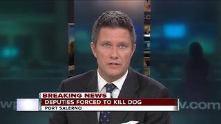 Dog attacks woman in Martin County - Video
