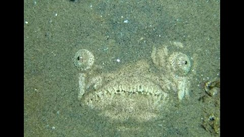 Googly-Eyed Fish Lurks in Shadows as Divers Swim Past