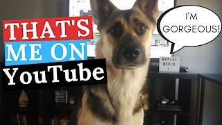 Dog Watches Herself On YouTube | Dog Thinks She's Famous