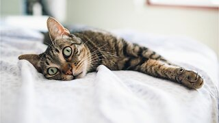 Benefits Of Letting Your Cat Sleep In Your Bed
