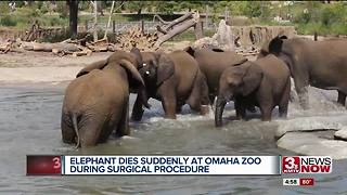 Henry Doorly Zoo elephant death - Video