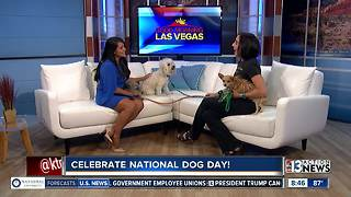 Hydrant Club celebrates National Dog Day