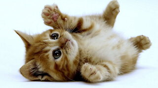 You can't get over this adorable kitten
