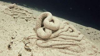 Bizarre footage shows other-worldy worm leave large coils of sand on sea bed - Video