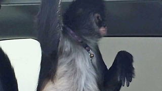 Home Depot worker attacked by spider monkey in Okeechobee County - Video