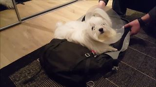 Dog refuses to let owner leave for vacation - Video