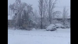 Snowstorm Damages Trees, Power Lines in Western Oregon