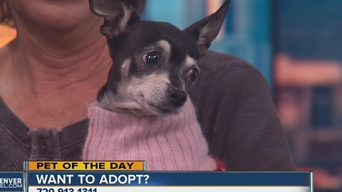 Pet of the day for December 3rd - Sarafina