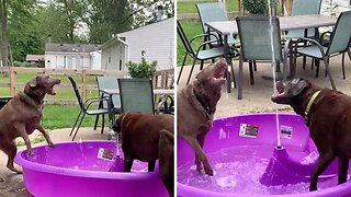 Pair of thirsty dogs tackle water fountain together