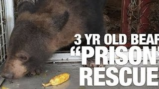 "Three-Year-Old Bear Rescued from ""Prison"" - Video"