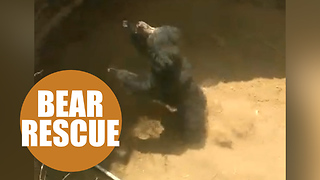 Shocking footage shows sloth bear being rescued from a dry well - Video