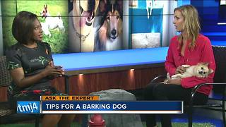 Ask the Expert: Tips for barking dogs