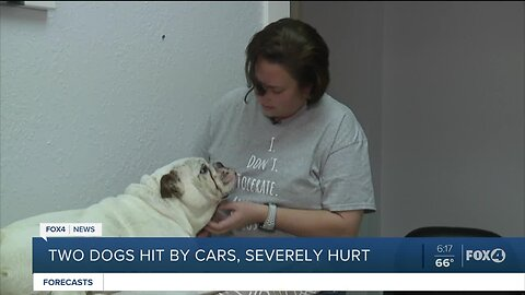 Two dogs hit by cars and severely injured saved by local rescue