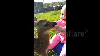 Baby interacts with fawn - Video