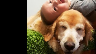 Smiling Golden Retriever entertains laughing baby - Video