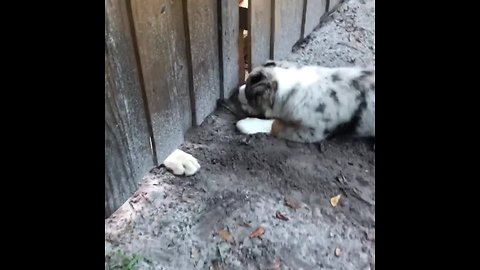 Puppy Desperately Tries To Play With A Dog On The Other Side Of A Gate