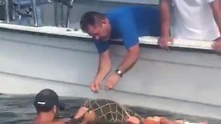 This Video Of Sea Turtle Being Released From Fishing Net Has A True Happy Ending