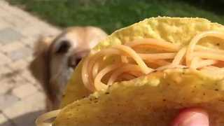 Golden Retriever Finally Learns to Catch - Video