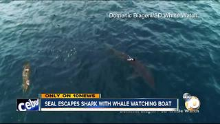 VIDEO: Shark chases seal off coast of San Diego - Video