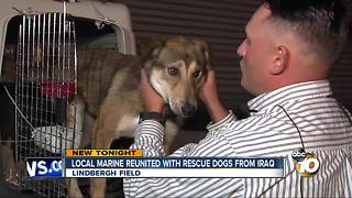Local Marine reunited with rescue dogs from Iraq - Video