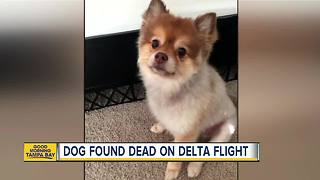 Dog found dead after cross-country flight - Video