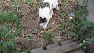 SOUTH AFRICA - Durban - Cat plays with a snake (Videos) (oMz)