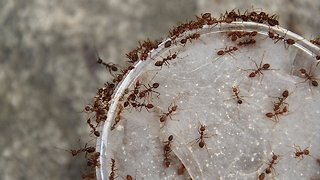The Lab: What Ants Can Teach Humans About Teamwork