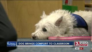 Therapy dog in Papillion classroom - Video