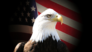 America's Greatest Animals: Bald Eagle - Video