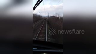 Flock of sheep on the tracks block train - Video