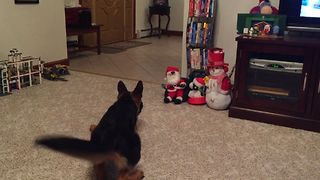 German Shepherd vs Mini Santa Claus - Video