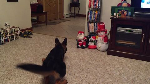 German Shepherd vs Mini Santa Claus