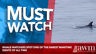 Whale Watchers Spot One Of The Rarest Maritime Sights Of All Time - Video