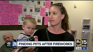Dogs flood Phoenix animal shelters after July 4 - Video