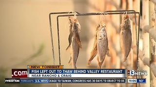 Fish left to thaw outside Las Vegas restaurant - Video