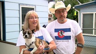 7Everyday Hero Cindy Marques volunteers for MidAmerica Boston Terrier Rescue - Video