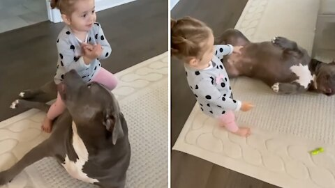 Baby girl adores her pit bull best friend