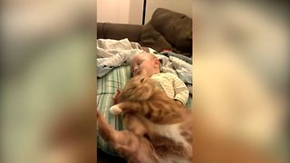 Baby Has The Best Napping Buddy - Video