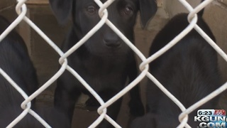 Humane Society takes in puppies rescued from Mexico - Video