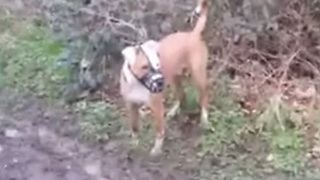 Dog playing in mud exhibits classic canine behavior - Video