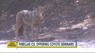 Pinellas County offering coyote seminars - Video