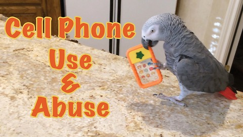 Einstein the Parrot uses and abuses his toy cell phone